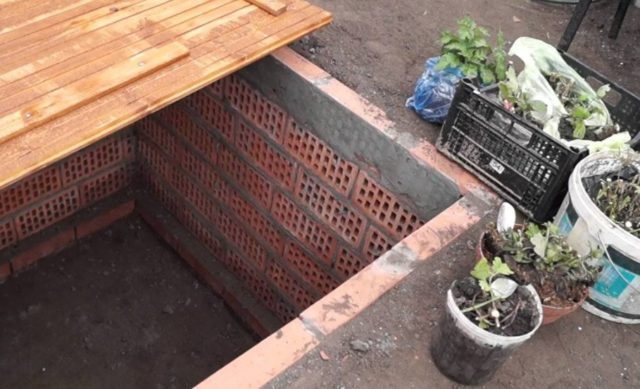 Чем и как укрывать хризантемы на зиму от мороза
