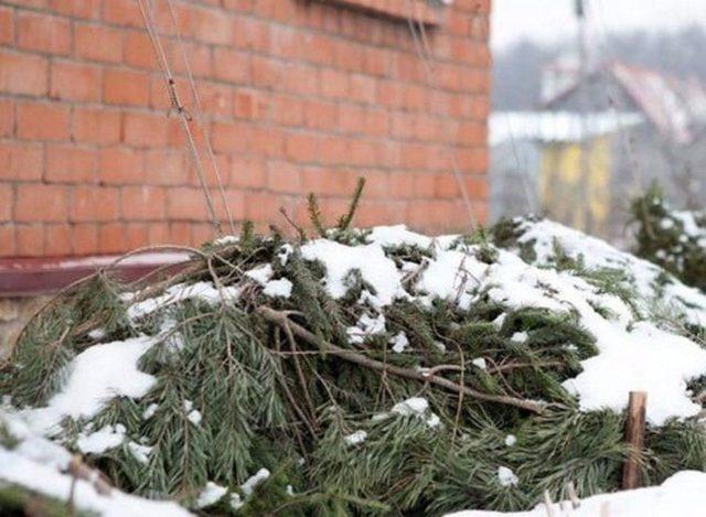 Уход и подготовка хосты осенью к зиме в открытом грунте