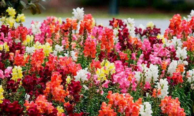 Какие цветы посадить на рассаду в декабре