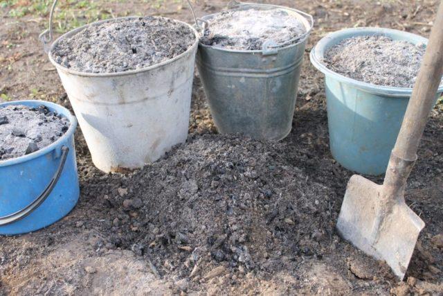 Уход и подготовка лилейников осенью к зиме