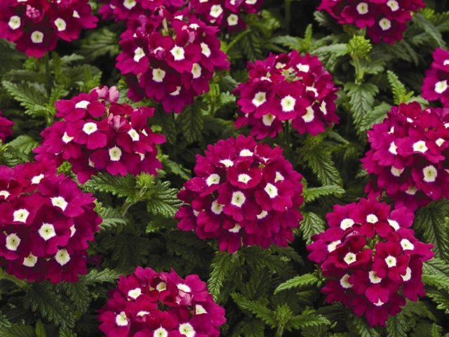 Какие цветы сажать на рассаду в феврале